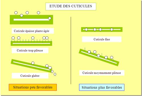 ETUDE DES CUTICULES