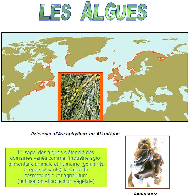 L'usage des algues